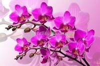 Две веточки орхидеи