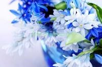 Синие весенние цветы