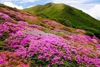 Альпийские луга в цвету