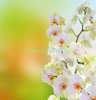 Орхидея на желтом фоне