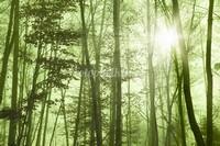 Лес стволы деревьев