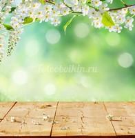 Цветы яблони на зеленом фоне