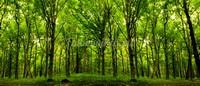 Ярко зеленый лес