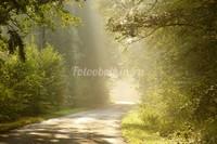 Раннее утро в лесу