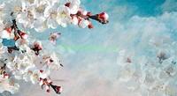 Ветка сакуры на фоне неба