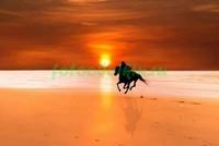 Конь бежит по пляжу