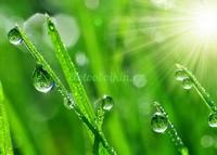 Крупные капли росы на траве