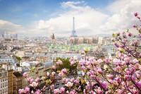 Магнолии днем в Париже