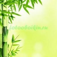 Светлый бамбук