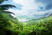 Тропический густой лес
