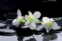 Белая орхидея с черными камнями