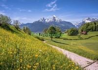 Альпийский лужок