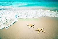 Две морские звезды на берегу