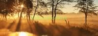 Панорама деревья на закате