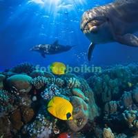 Дельфины и желтые рыбки