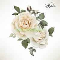 Рисунок белых роз