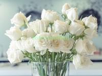 Белые розы в вазе