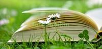 Книга на траве