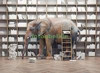 Слон в библиотеке
