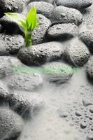 Листик в камнях