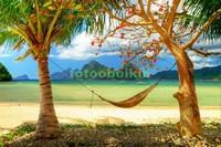 Гамак под пальмами