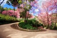 Красивый сад с цветущими деревьями