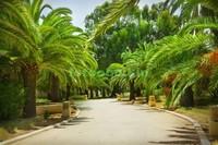 Сад с пальмами