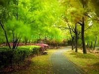 Сад с деревьями