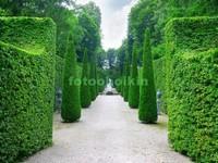 Сад из кустов