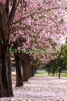 Сад с красивыми деревьями