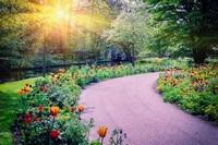 Дорожка в саду с тюльпанами