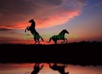 Две лошади на фоне заката