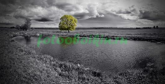 Одинокое зеленое дернво
