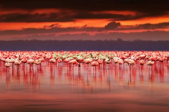 Фламинго в Африке
