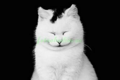Улыбающийся кот
