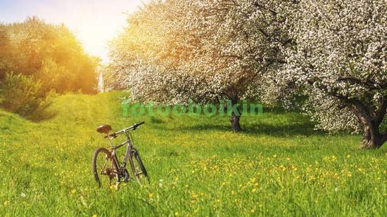 Велосипед в саду