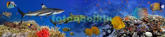 Панорама с рыбками и акулой