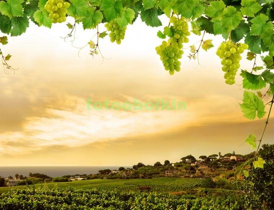 Виноградник в Италии