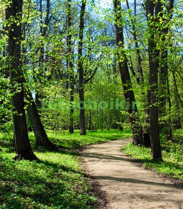 Деревья весной в мае