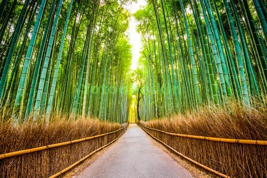 Бамбуковая зеленая роща