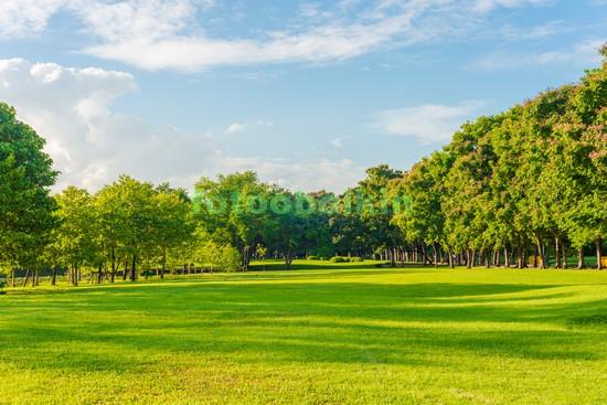Зеленый луг с деревьями