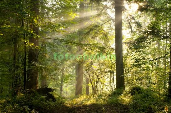 Солнце в дремучем лесу