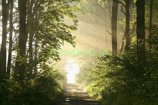 Стволы деревьев и лучи солнца
