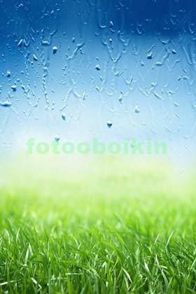 Яркая трава с каплями утренней росы