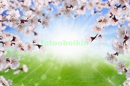 Ветки сакуры на зеленом лугу