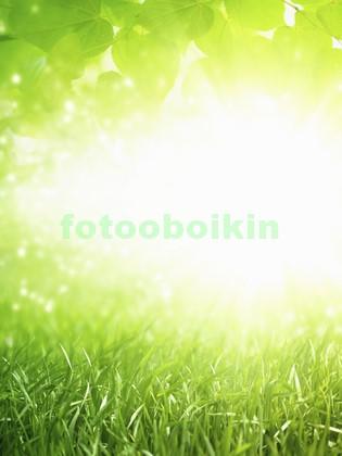Свежая трава с листьями