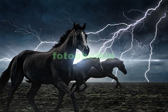 Два черных коня