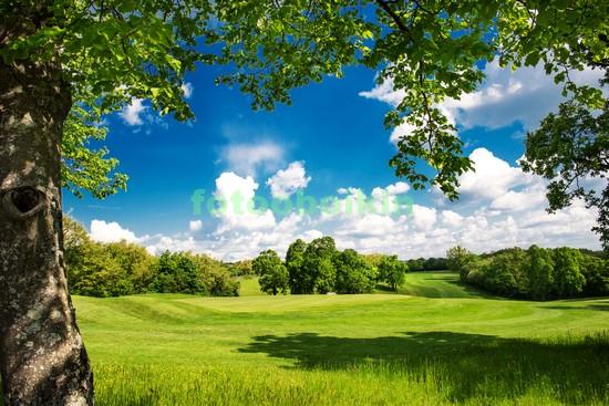 Зеленый луг под веткой дерева