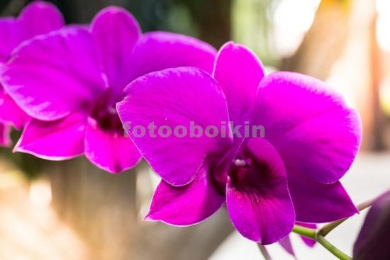 Яркая розовая орхидея