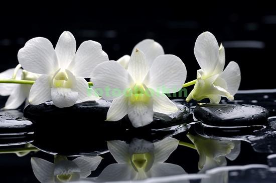 Ветка орхидеи белой